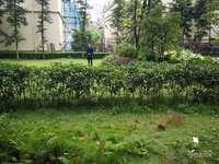 金科地产一楼带超大花园,可几代同堂,住家首选,可商贷,可公积金